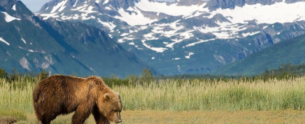 Grizzly Bear at Stan Price State Wildlife Sanctuary