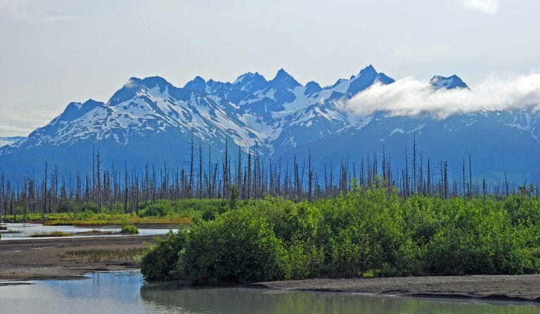 Cordova Alaska, part of stunning Southeast Alaska, is hope to the Copper River Delta Shorebird Festival in May