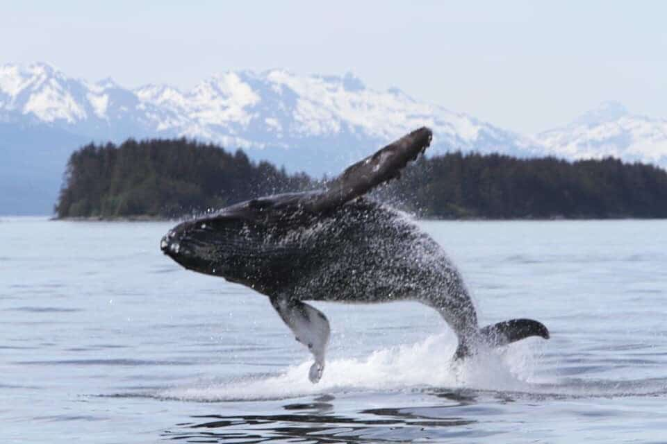Luxury Cruises to Juneau With Seabourn Cruises in 2021