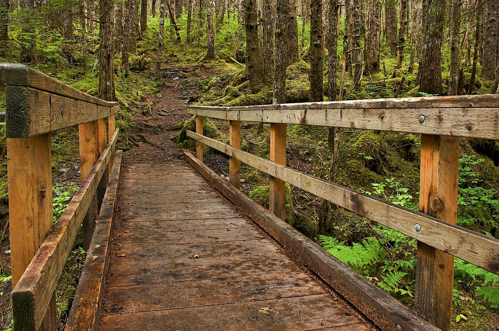 Mount Juneau is just one of the interesting Juneau hiking trails to explore while you're here